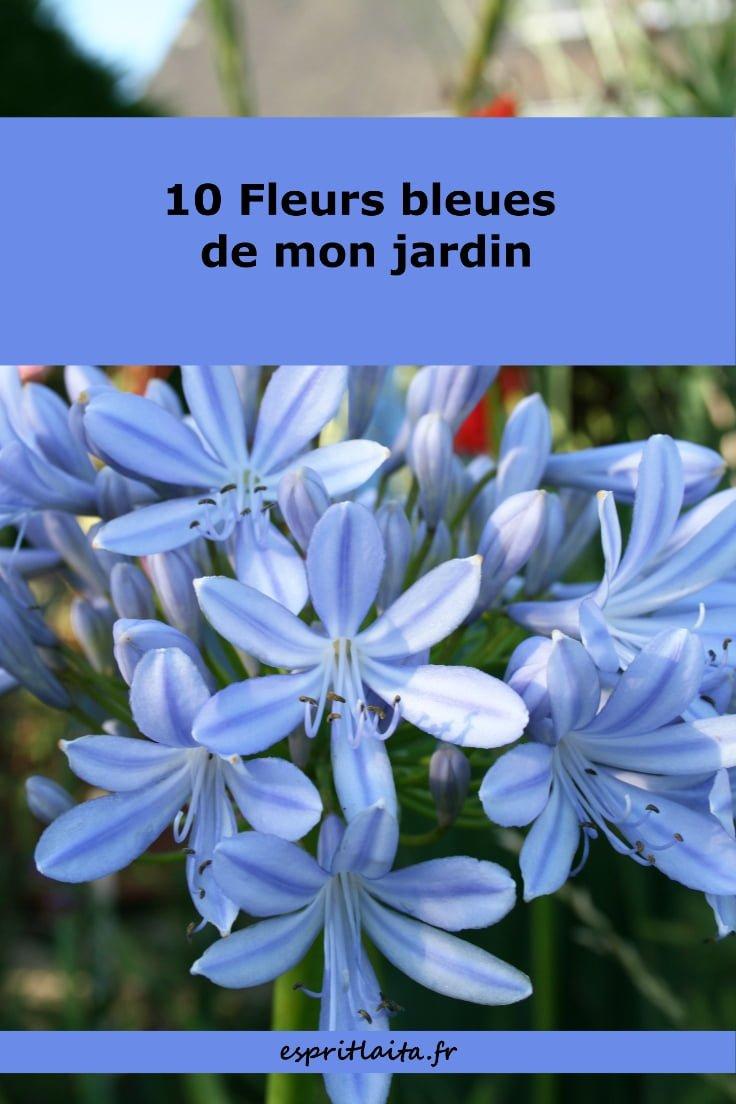 10 fleurs bleues de mon jardin