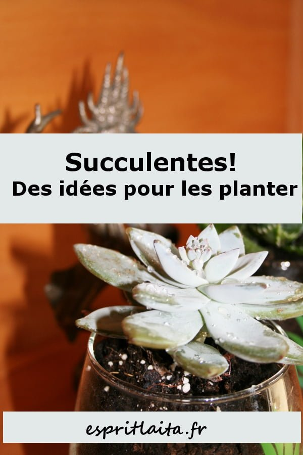 idée succulente et plantes grasses