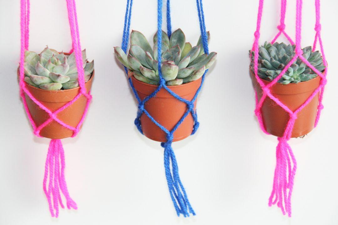 3 succulentes macramé laine