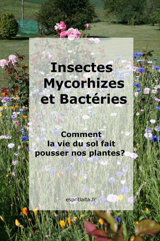 Insectes, mycorhizes et bactéries: comment la vie du sol fait pousser nos plantes?