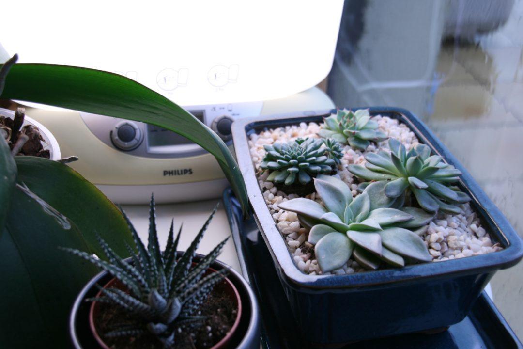 luminothérapie pour plante