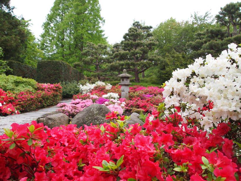 azalées jardin botanique Hambourg
