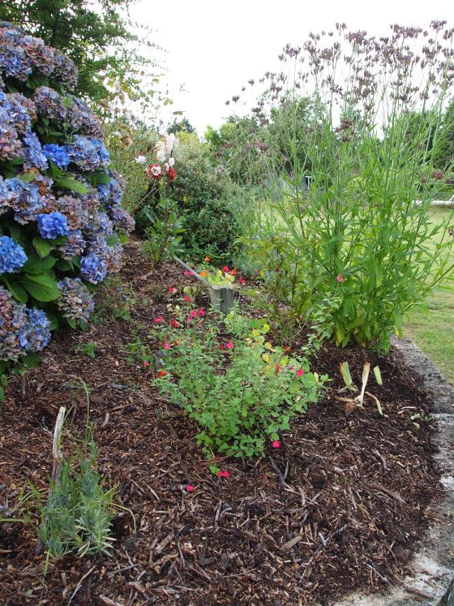 utilisation du BRF au jardin ornemental