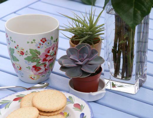 succulente sur table bleue
