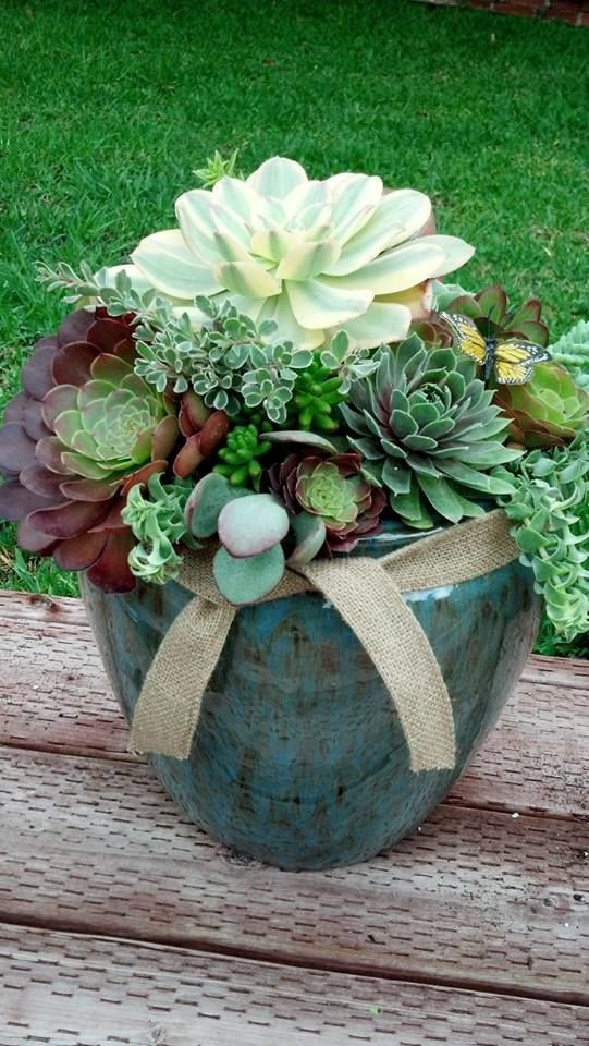 composition de succulentes dans grand pot
