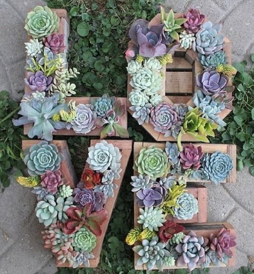succulente love composition