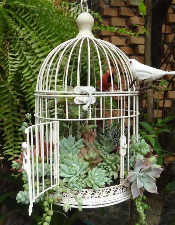 succulentes dans cage à oiseaux