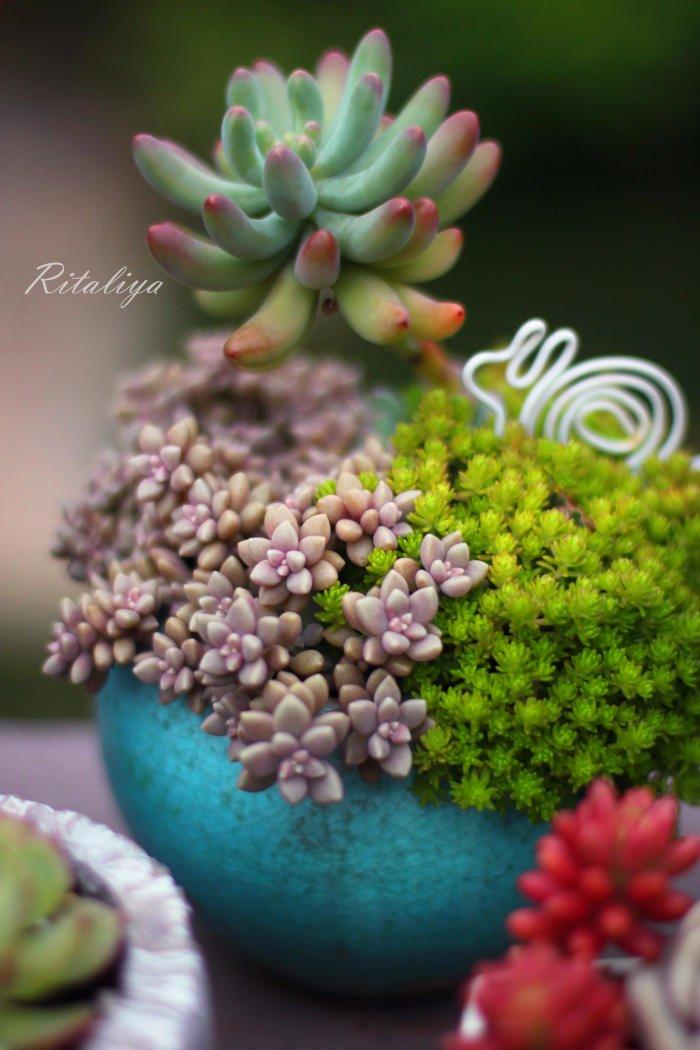 10 id es de composition florale avec des succulentes - Composition plantes grasses interieur ...
