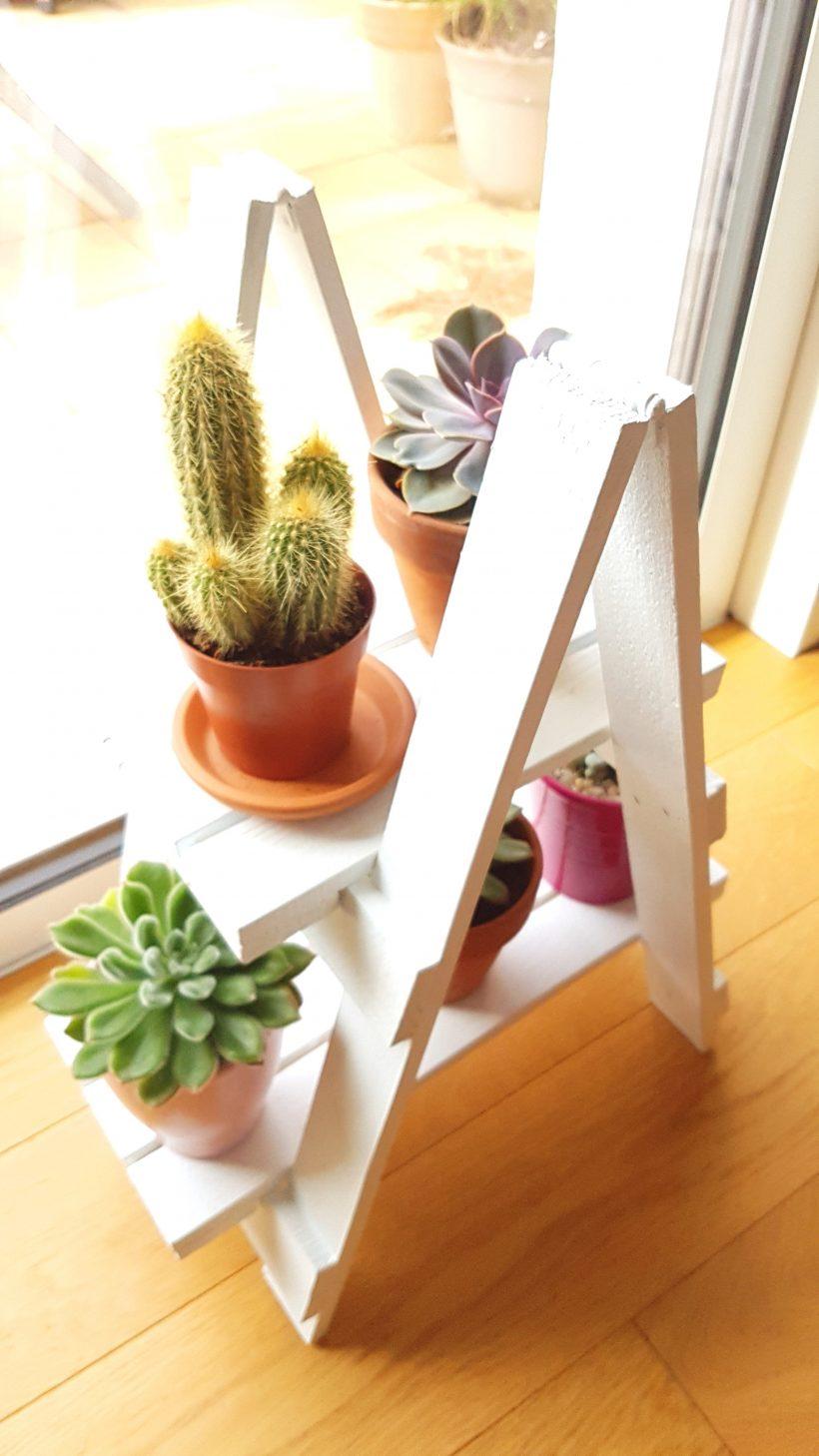 succulentes étagère blanche