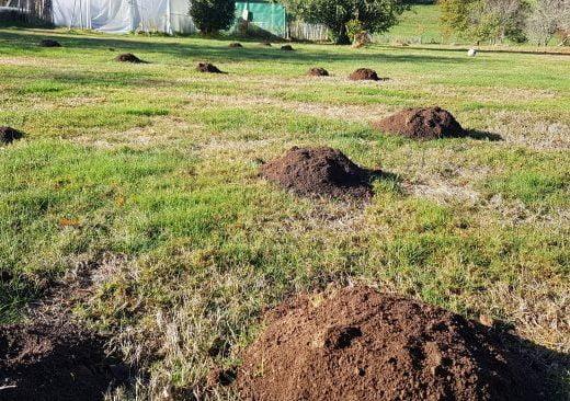 jardin en novembre