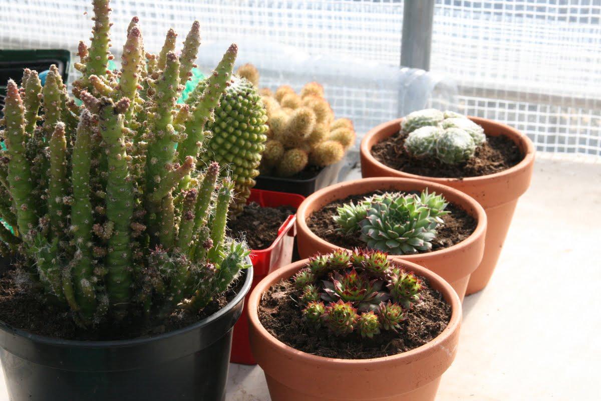 comment conserver les succulentes et les plantes grasses en hiver esprit la ta