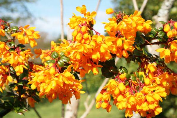 10 fleurs jaunes
