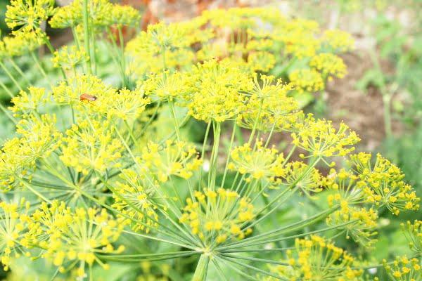 10 fleurs jaunes pour le jardin