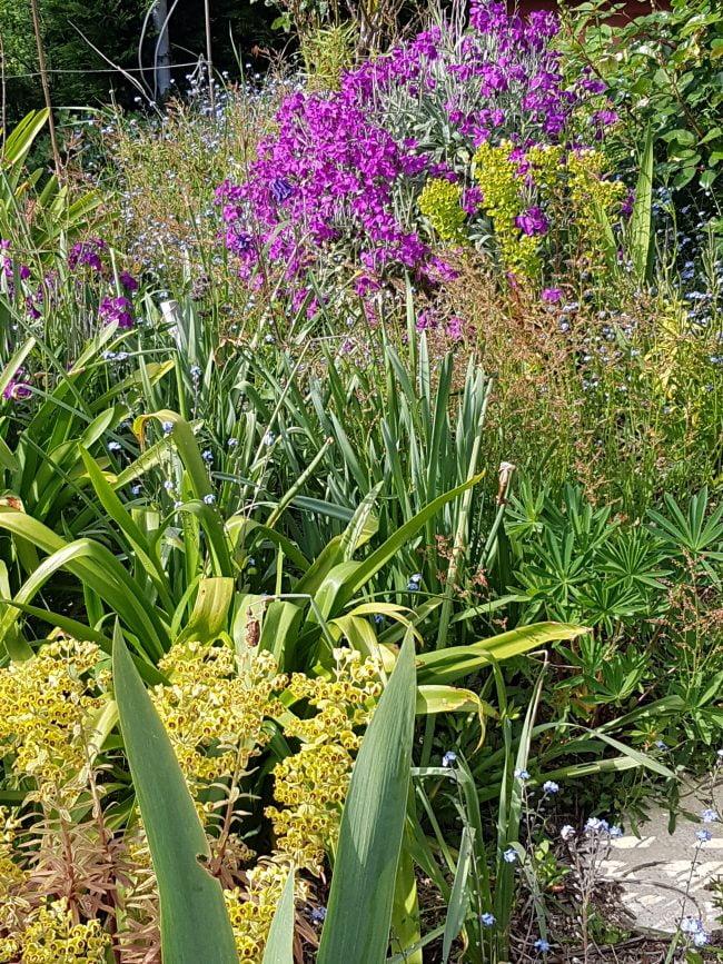 Jardin breton en avril