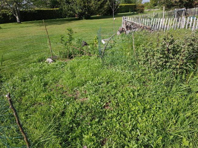 jardiner en avril - un jardin breton
