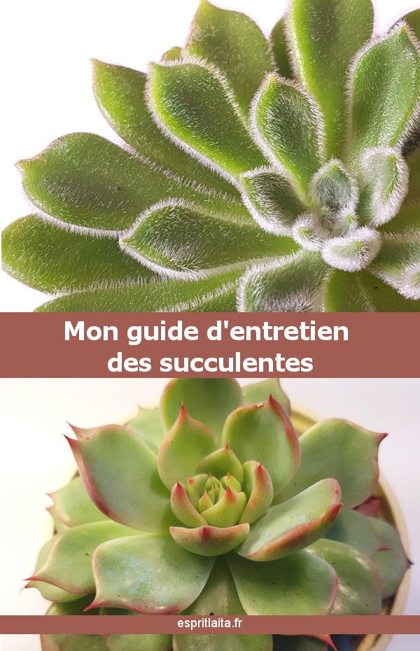 mon guide d'entretien des succulentes et plantes grasses en intérieur