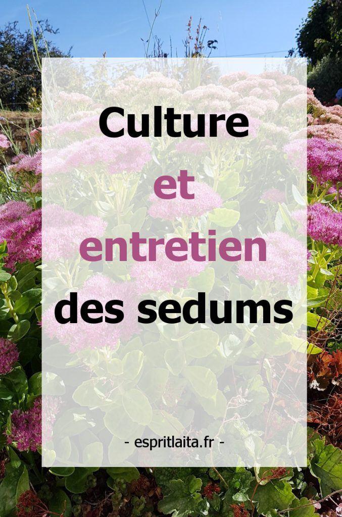 culture et entretien des sedums