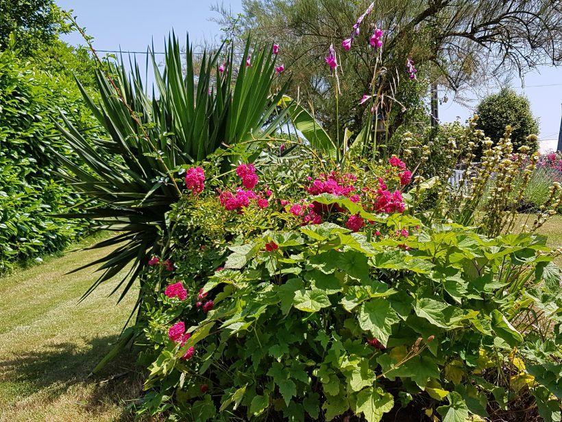 Le jardin esprit Laïta en juin
